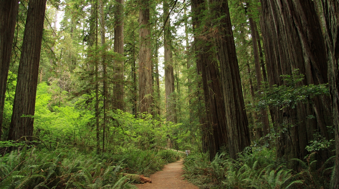 slider2_redwood_forest